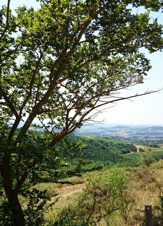 11-Limoux-Paysage