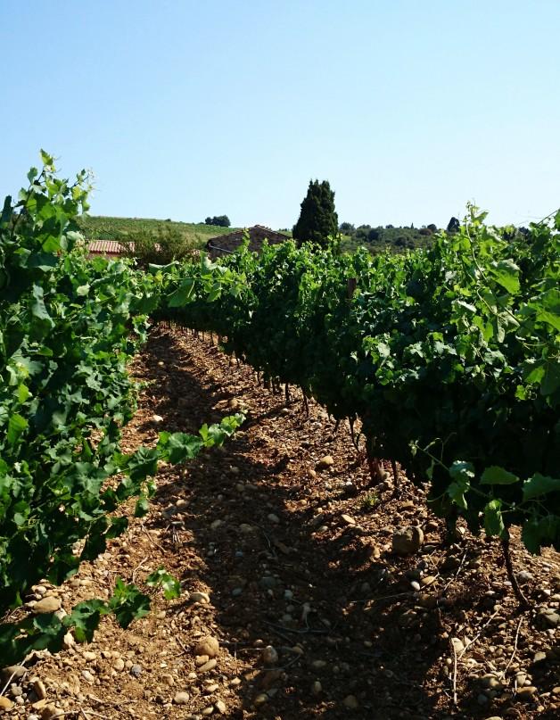 15-Limoux-vue vignes